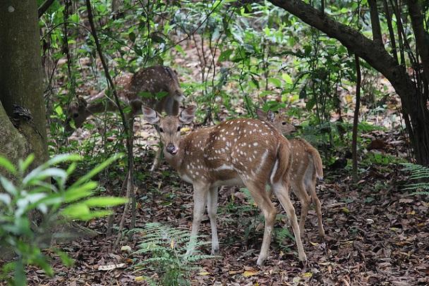 gokarna-safari-park_kathmandu-tourist-places