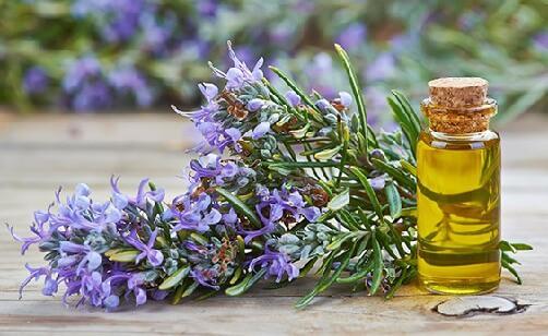 Rosemary Oil 1