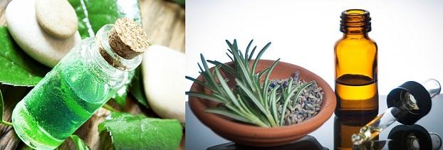 Tea Tree or Lavender Oil