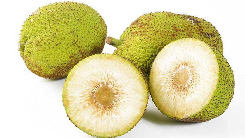 13 Wonderful Breadfruit Benefits (Bakri Chajhar) for Skin, Hair and Health