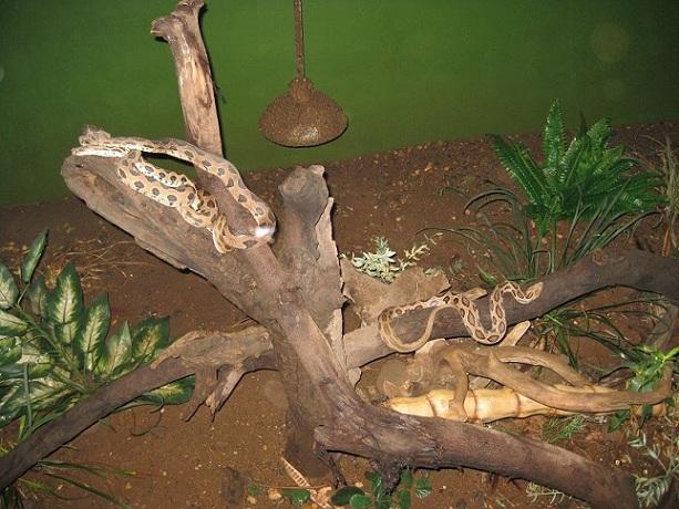 katraz-snake-garden_pune-tourist-places