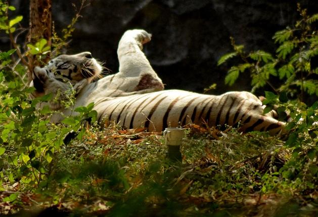 rajiv-gandhi-national-park_pune-tourist-places