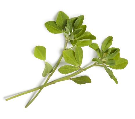 fenugreek leaves seeds