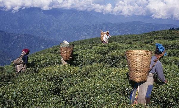 darjeeling_west-bengal-tourist-places