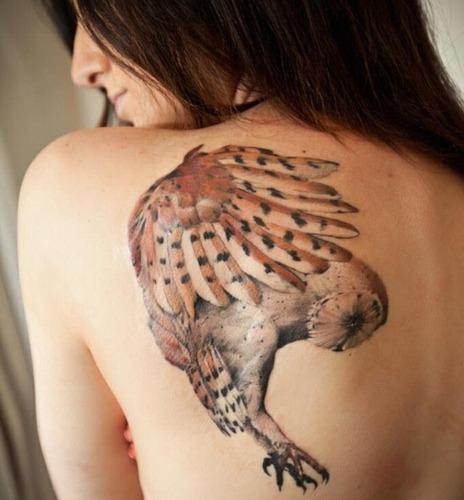 Beautiful wings owl