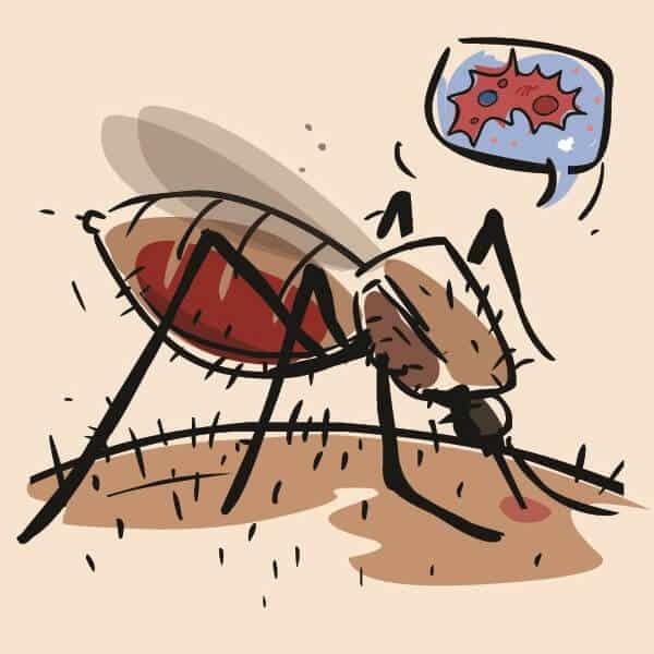 remedies for dengue fever