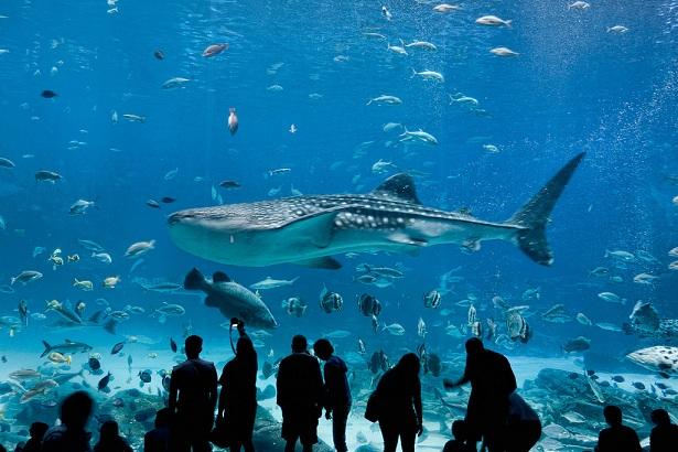 dubai-aquarium_dubai-tourist-places