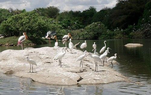 bird sanctuaries in india