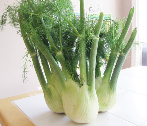 fennel benfits