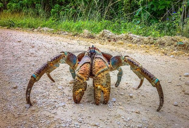great-nicobar-biosphere-reserve_andaman-tourist-places