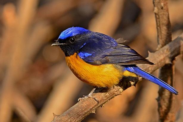kilbury-bird-sanctuary_nainital-tourist-places