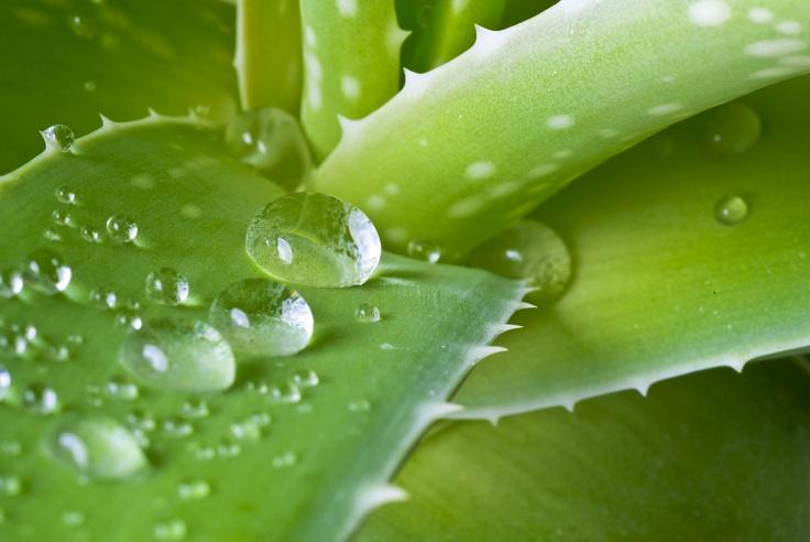 Aloe Vera Juice Benefits For Skin