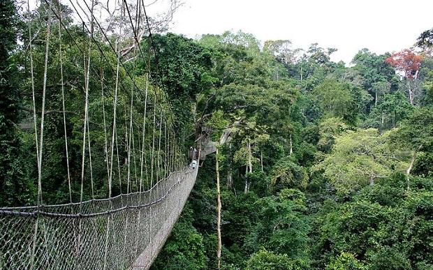 taman-negara_malaysia-tourist-places
