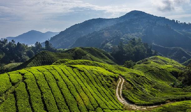 cameron-highlands_malaysia-tourist-places