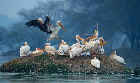 wildlife sanctuaries in india