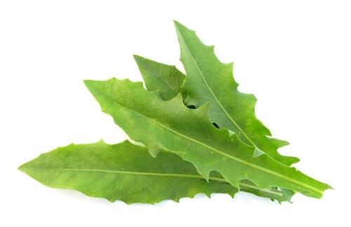 Dandelion leaves : home remedy for arthritis