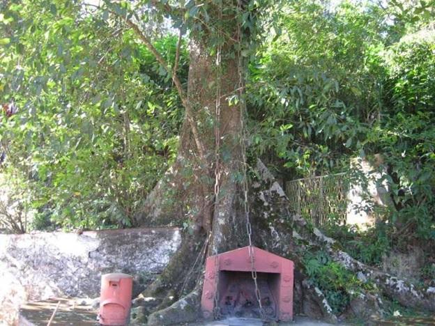 Chain Tree