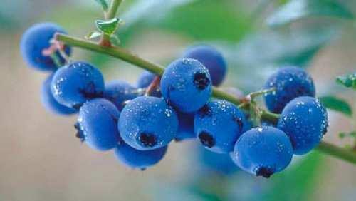 blueberry face masks