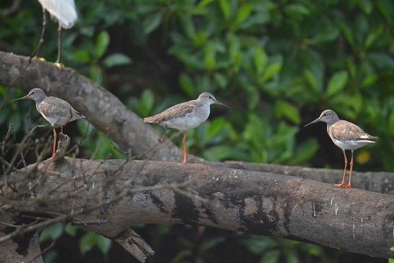parks-in-goa-the-salim-ali-bird-sanctuary