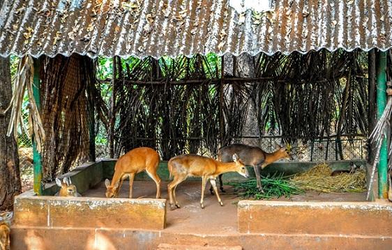 parks-in-goa-bondla-wildlife-sanctuary