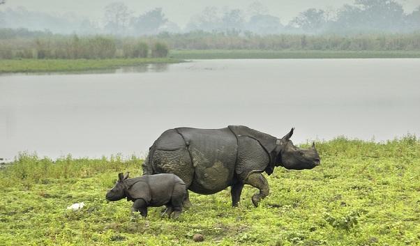 kaziranga-national-park_assam-tourist-places