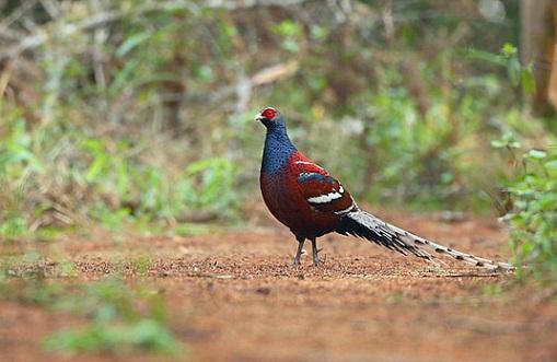 Thorangtlang Wildlife Sanctuary