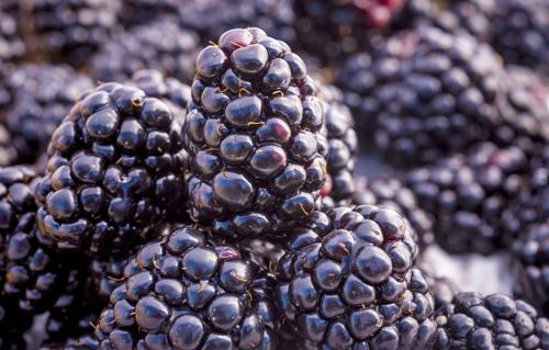 Fruits with high fiber 2