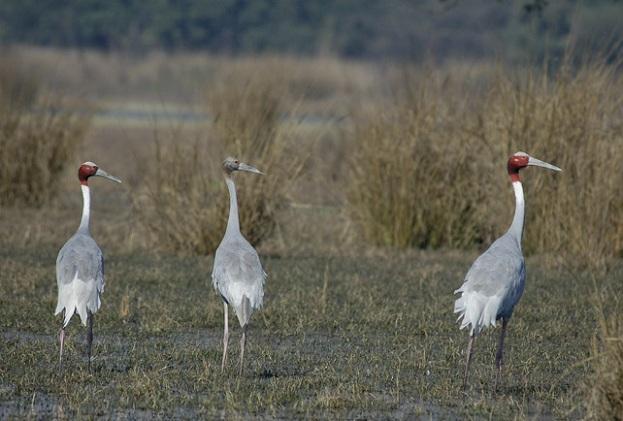 sultanpur-national-park_haryana-tourist-places