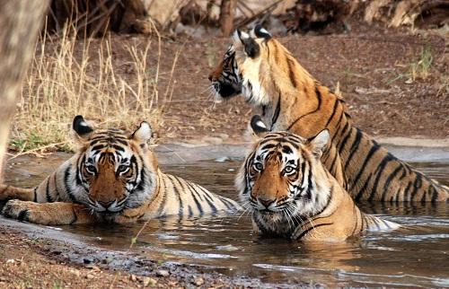 Honeymoon Places In Uttaranchal - Jim Corbett National Park