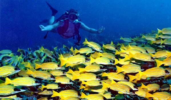 banana-reef_maldives-tourist-places