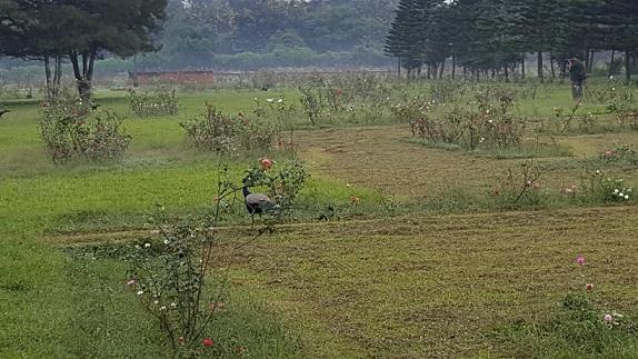 parks-in-bhubaneswar-ekamra-kanan-botanical-gardens