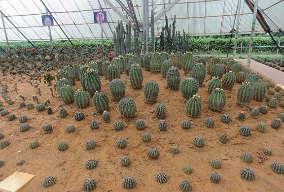 parks-in-bhubaneswar-cactus-garden