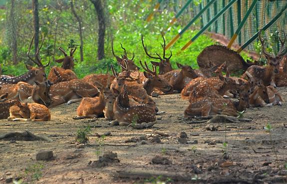 parks-in-burdwan-deer-park