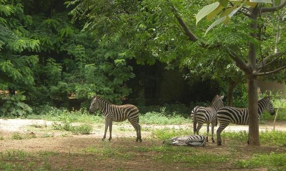 Famous Parks in Mysore-Sri Chamarajenra National Park