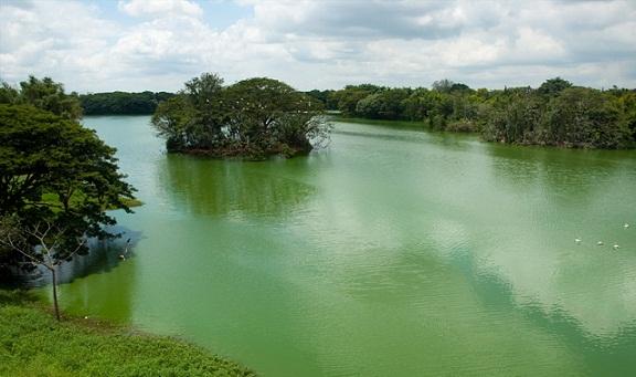 Famous Parks in Mysore-Karanji Lake Nature Park