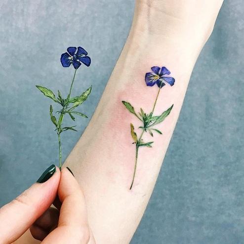 Pansy Single Flower
