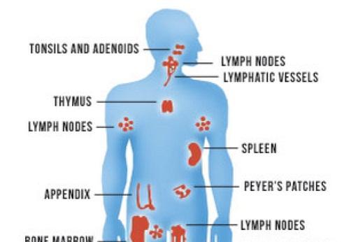 Weakens Body Immune System