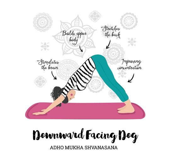 Adho Mukho Svanasana (Downward Facing Dog Pose)