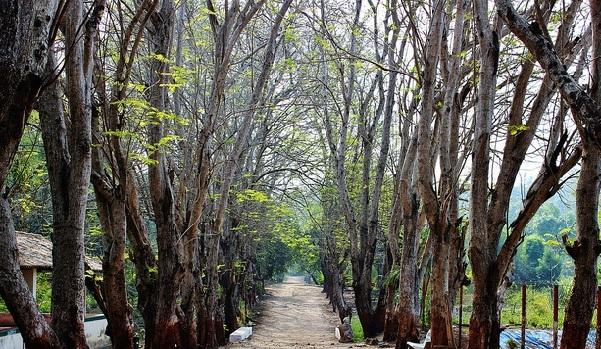 parks-in-gujarat-vansda-national-park