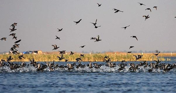 parks-in-gujarat-nalsarovar-bird-sanctuary