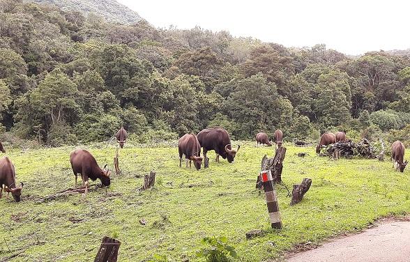 parks-in-kerala-pambadum-shola-national-park