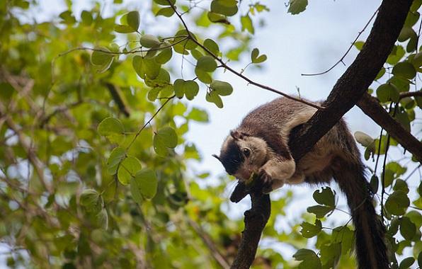 parks-in-kerala-chinnar-wildlife-sanctuary