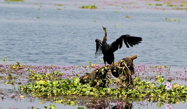 parks-in-kerala-kumarakom-bird-sanctuary