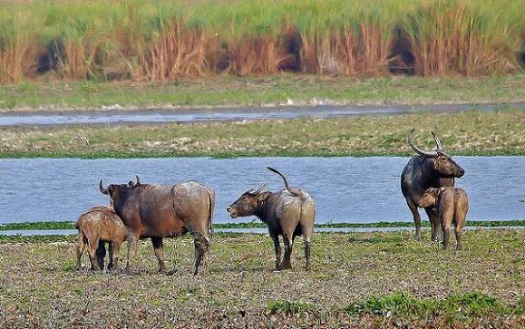 parks-in-chhattisgarh-udanti-sanctuary
