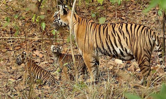 parks-in-chhattisgarh-indravati-national-park