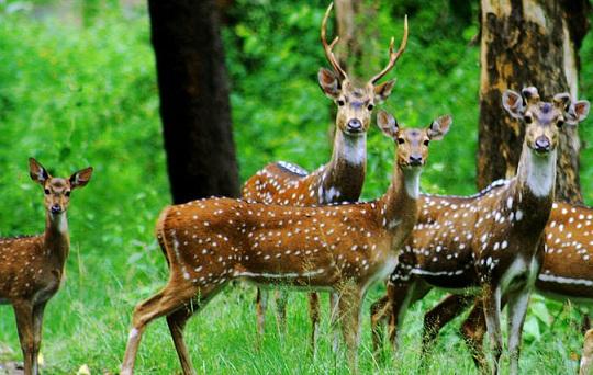 Famous Sanctuaries and Parks in Chhattisgarh