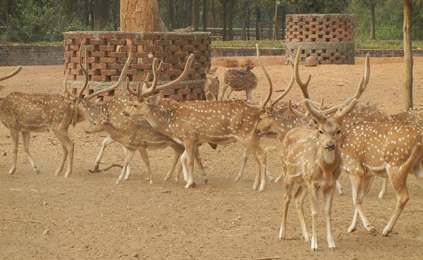 parks-in-jharkhand-ranchi-deer-park