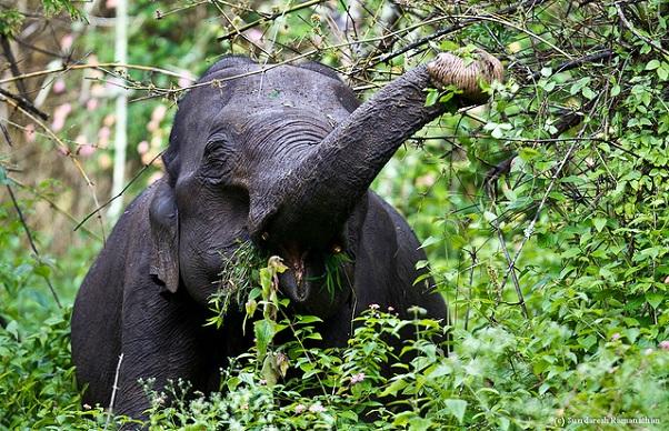 Famous Sanctuaries and Parks in Karnataka