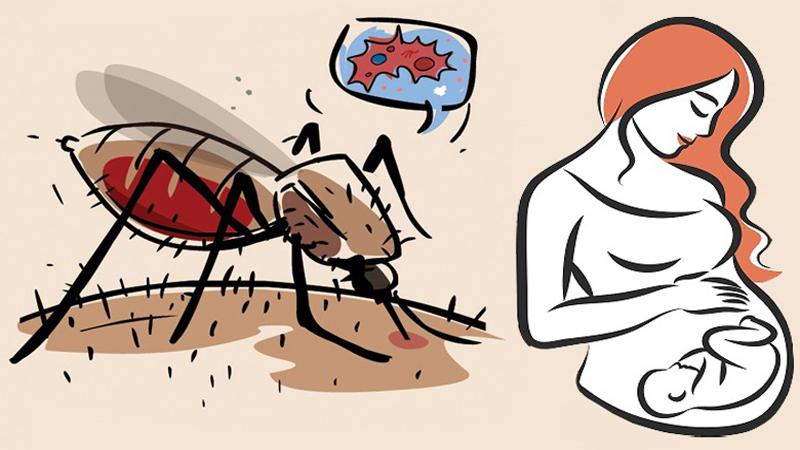 dengue during pregnancy