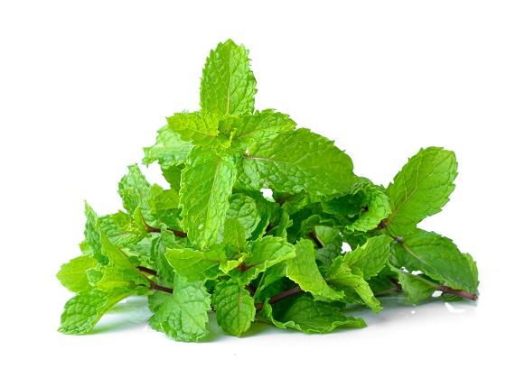 mint leaves 1